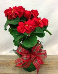 Winter Rose Poinsettia from Carl Johnsen Florist in Beaumont, TX