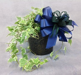 English Ivy Plant  from Carl Johnsen Florist in Beaumont, TX