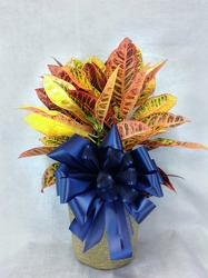 Croton Plant  from Carl Johnsen Florist in Beaumont, TX