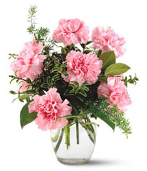 Half Dozen Pink Carnations from Carl Johnsen Florist in Beaumont, TX