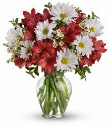 Dancing in Daisies from Carl Johnsen Florist in Beaumont, TX