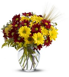 Fall for Daisies from Carl Johnsen Florist in Beaumont, TX