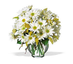 Daisy Cheer from Carl Johnsen Florist in Beaumont, TX